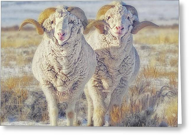 Double The Ram Power Greeting Card