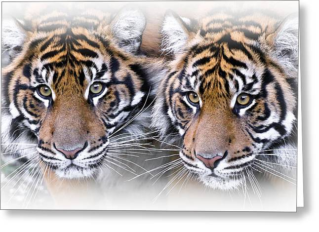 Double Trouble Tigers Greeting Card