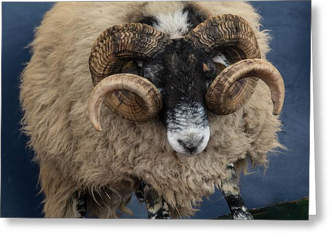 Dougal The Dancing Sheep  Greeting Card by Rob Hawkins