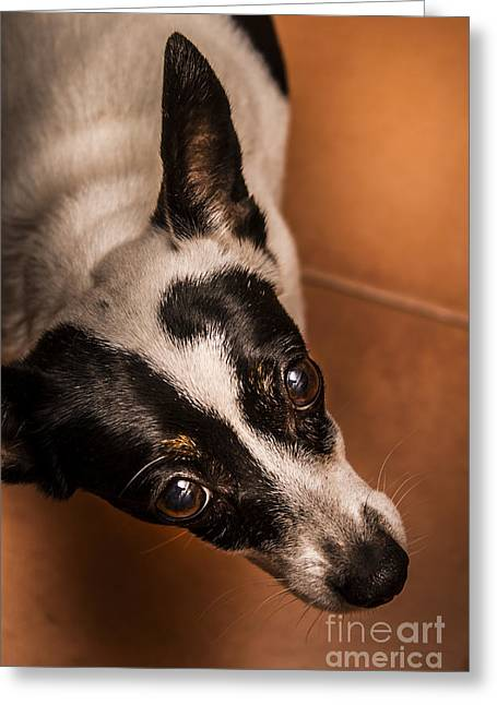 Dough-eyed Dog Greeting Card by Jorgo Photography - Wall Art Gallery