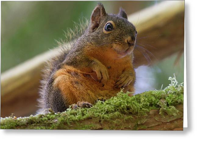 Douglas Squirrel Greeting Card