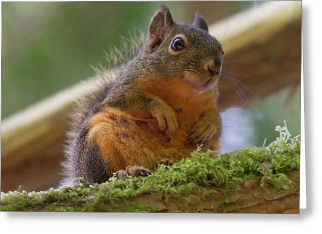 Douglas Squirrel Greeting Card