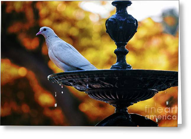 Greeting Card featuring the photograph Dove On Fountain Genovese Park Cadiz Spain by Pablo Avanzini