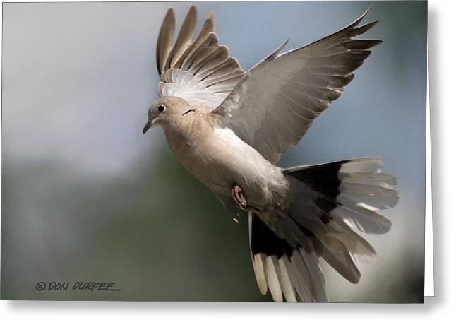 Greeting Card featuring the photograph Dove Takeoff by Don Durfee