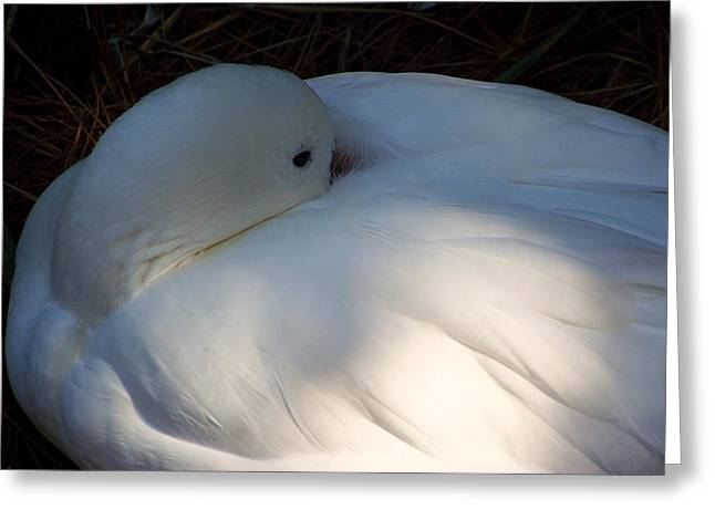 Down For A Nap Greeting Card by Karen Wiles