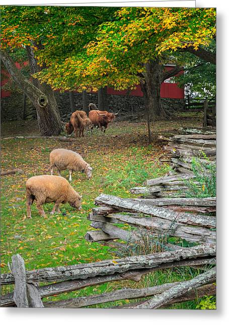 Down On The Farm 2015 Greeting Card by Bill Wakeley