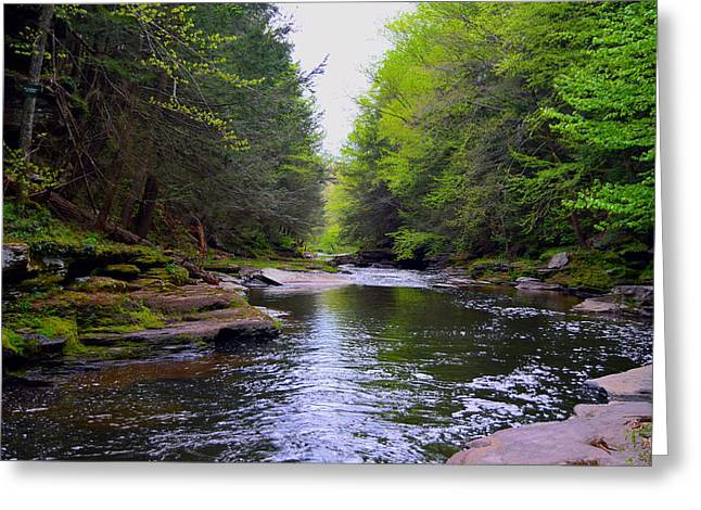 Down The Creek  Greeting Card by Billie Steer