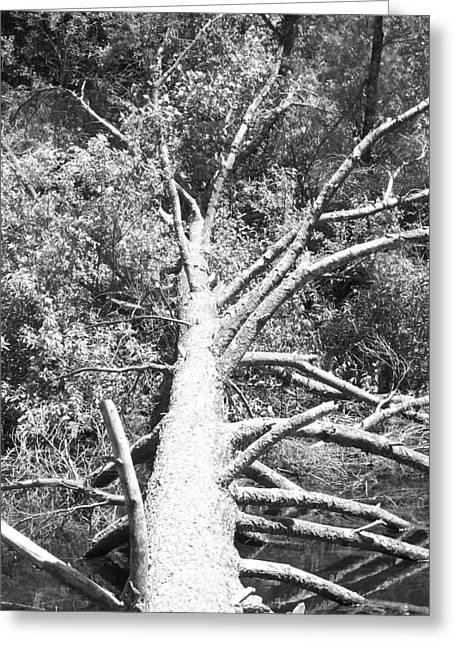 Down Tree Greeting Card by Derek Clark
