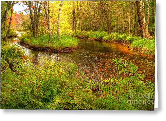 Greeting Card featuring the photograph Downeast Fall Stream by Alana Ranney