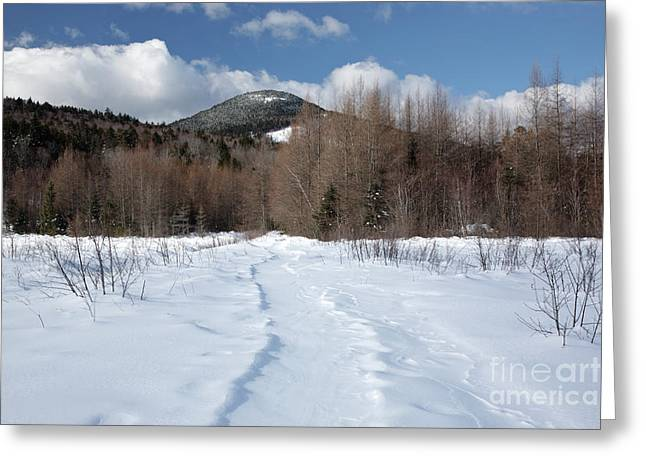 Downes - Oliverian Brook Ski Trail - White Mountains New Hampshire  Greeting Card by Erin Paul Donovan