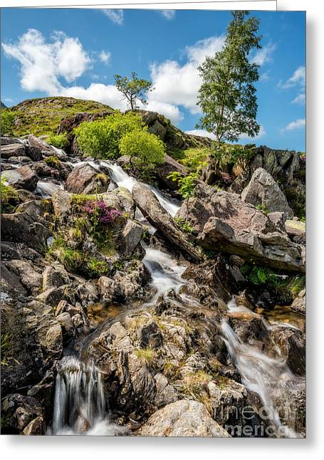 Downstream Greeting Card by Adrian Evans