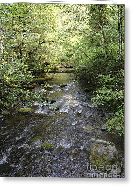 Downstream Greeting Card