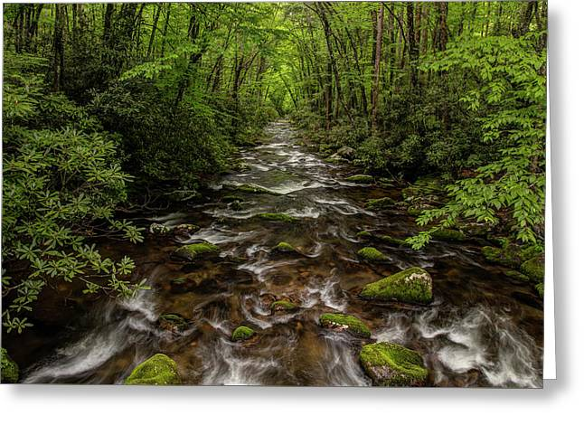 Downstream Greeting Card by Chris Austin
