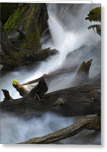 Downstream Greeting Card by Matthew Fredricey
