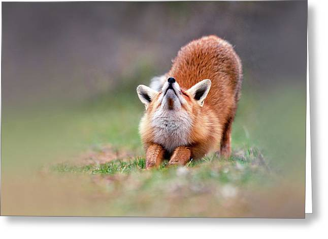 Downward Fox Greeting Card by Roeselien Raimond