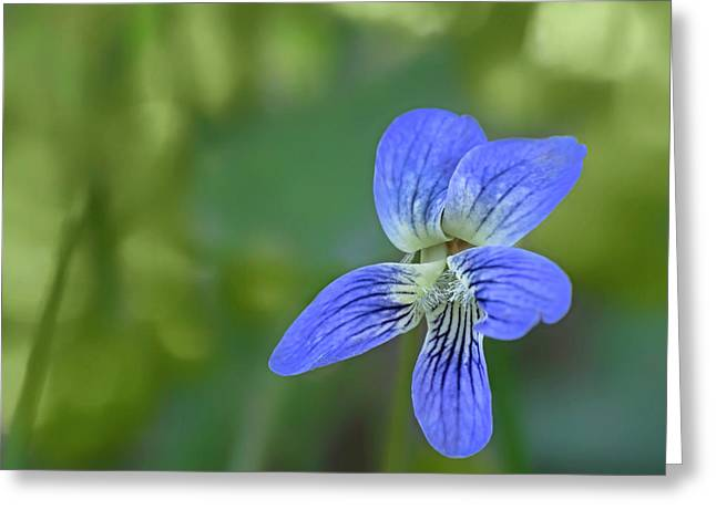 Downy Blue Violet Greeting Card