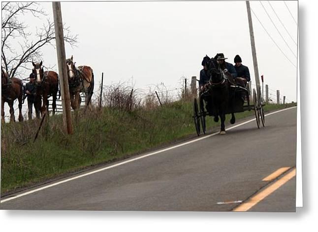 Draft Horses And Amish Greeting Card