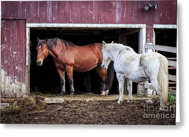Draft Horses Greeting Card