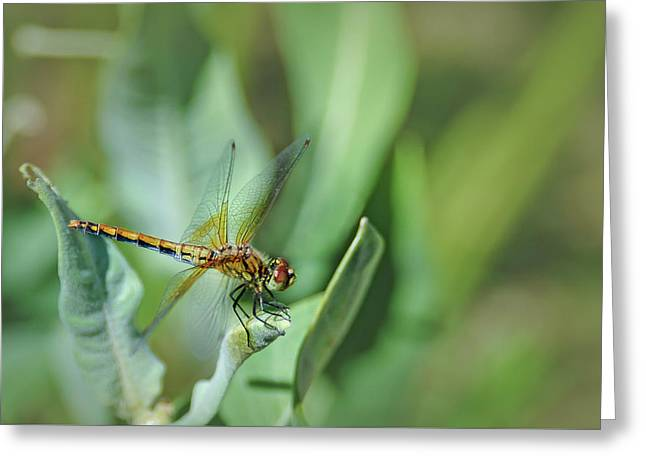 Dragon Fly 1 Greeting Card by Rick Mosher