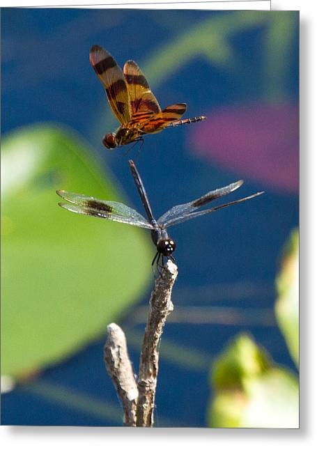 Dragon Fly 195 Greeting Card