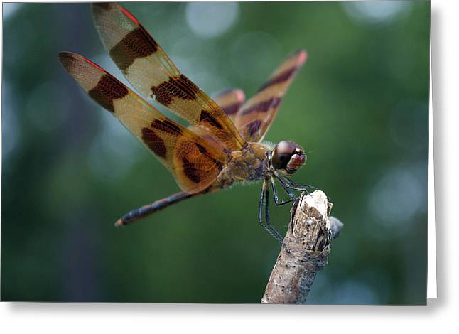 Dragon Fly 8-2 Greeting Card