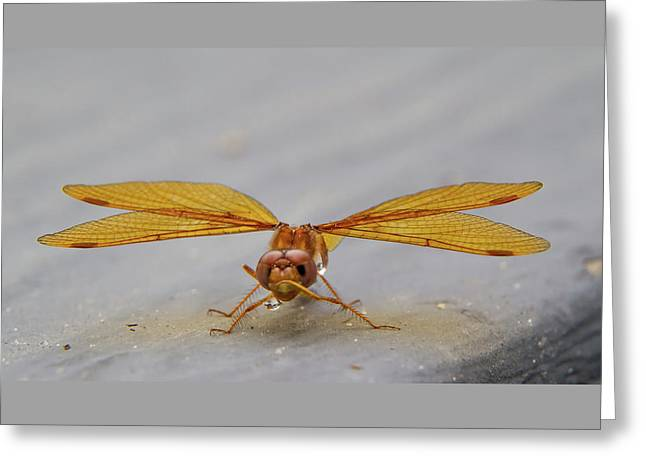 Dragon Fly Hanging Around Greeting Card