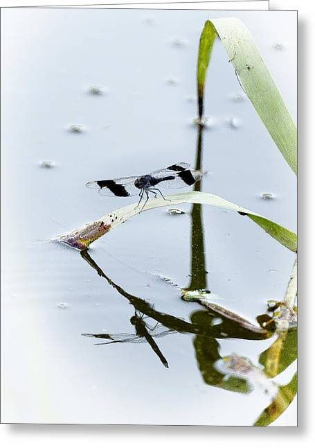 Dragon Fly Greeting Card by Patrick Kain