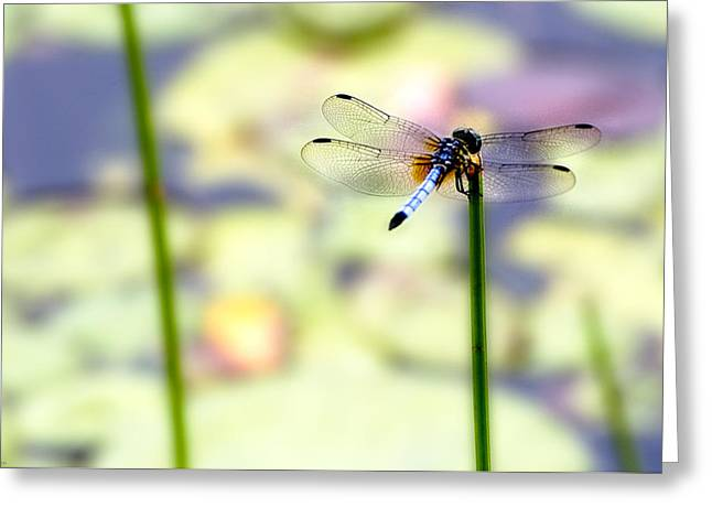 Dragon On The Pond Greeting Card