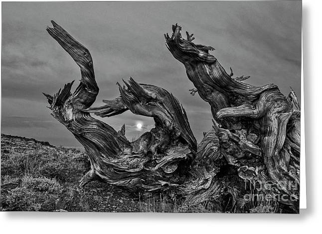 Dragon Wood Greeting Card by Jamie Pham