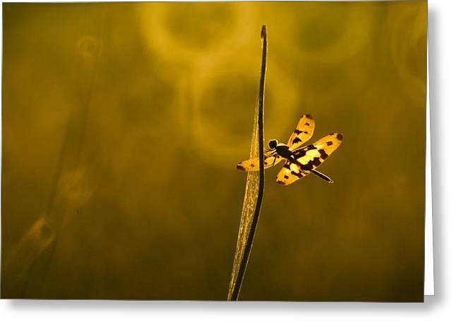 dragonfly 001 Rhyothemis variegata arria Greeting Card