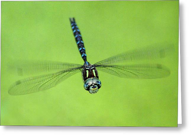 Dragonfly #1 Greeting Card by Ben Upham III