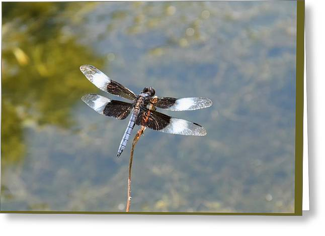 Dragonfly 1 Greeting Card