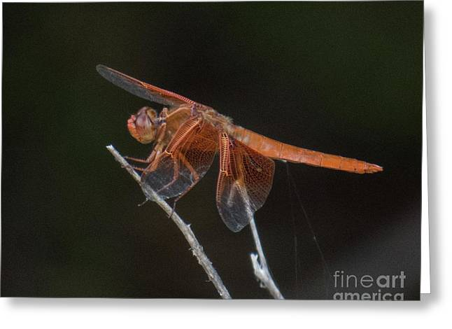 Dragonfly 11 Greeting Card