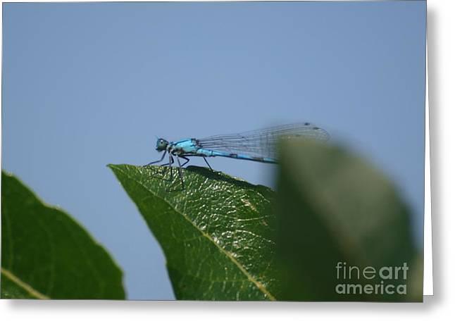 Dragonfly 19 Greeting Card by Vivian Martin