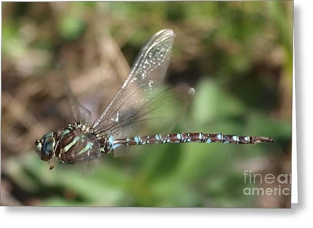 Dragonfly 22 Greeting Card by Vivian Martin
