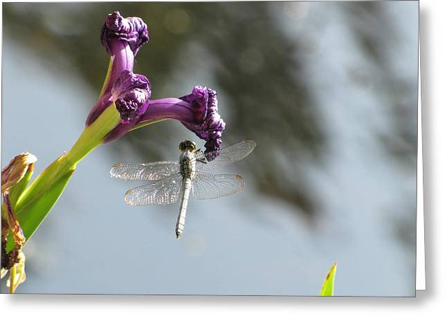 Dragonfly 3 Greeting Card by Jason Moore