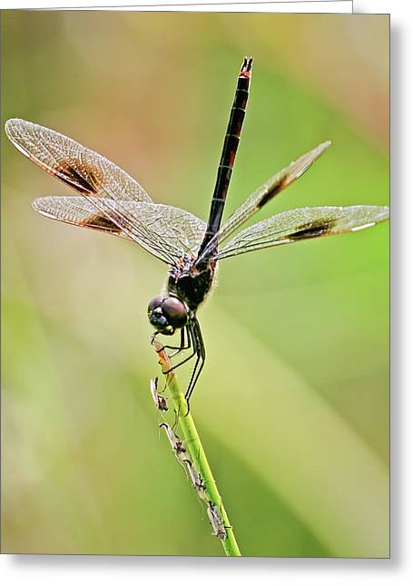 Dragonfly And Friends Greeting Card by Dawn Currie