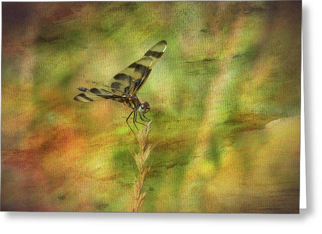Dragonfly Art Greeting Card by Mary Bellew