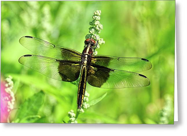 Dragonfly Beauty Greeting Card