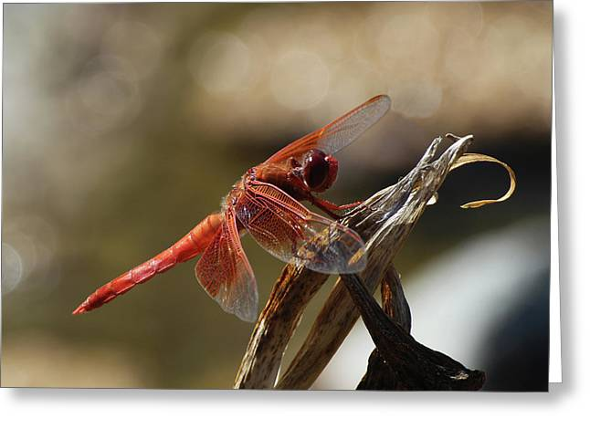 Dragonfly Closeup 1 Greeting Card by Richard Stephen