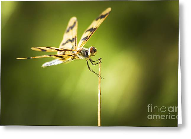 Dragonfly Clutching Fern Blade Greeting Card by Jorgo Photography - Wall Art Gallery