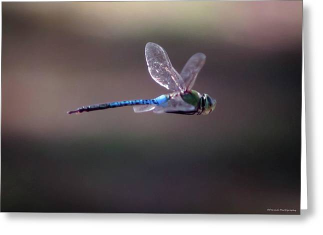 Dragonfly Greeting Card by Debra Forand
