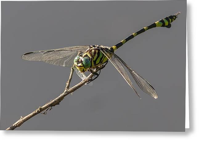 Dragonfly Dinner Greeting Card