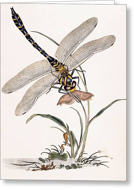 Dragonfly Greeting Card by Edward Donovan
