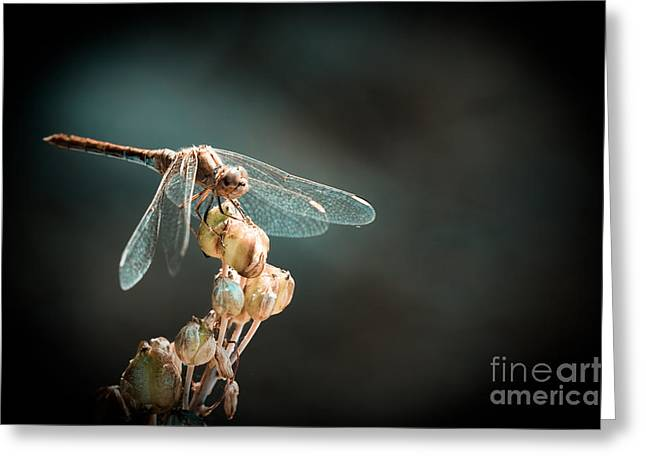 Dragonfly Greeting Card by Gabriela Insuratelu