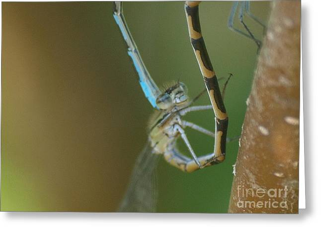 Dragonfly - Grin And Bear It Greeting Card by Vivian Martin