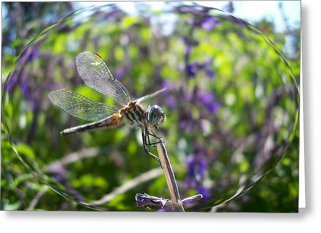 Dragonfly In Bubble Greeting Card