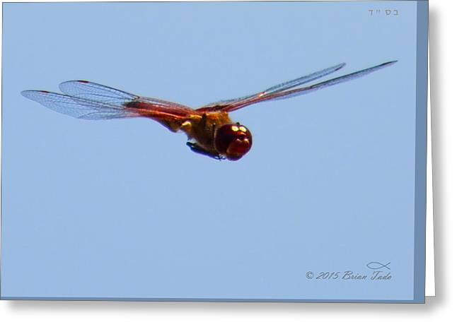 Dragonfly In Flight Close Up Greeting Card