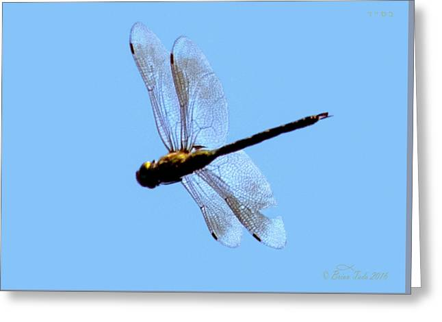 Dragonfly In Flight, Front Yard Greeting Card