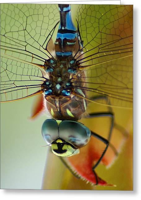 Dragonfly In Thought Greeting Card